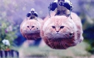 Hovercats in attack
