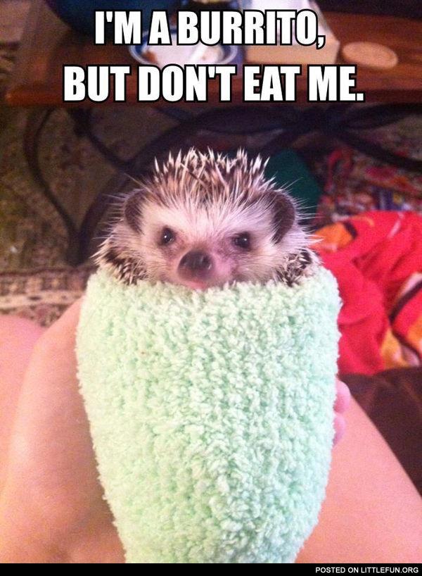Los Quimicos Memesdeouimica Memes De Quimica Dominaremoselmundo De Luis Felipe 2076018 in addition I Put It To YouBarry Roux Is A Viral Sensation 20140317 besides 1043695 together with Meme Si Bebes No Conduzcas Y Feliz 2017 also Dressed Hedgehog. on oscar meme facebook