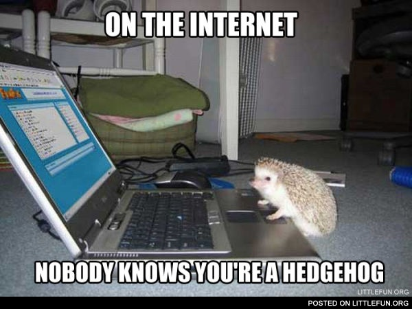 On the internet nobody knows you are a hedgehog. Hedgehog and laptop.