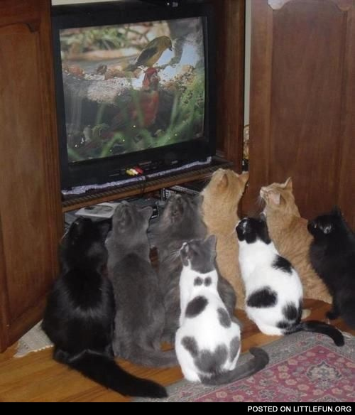 Cats and TV