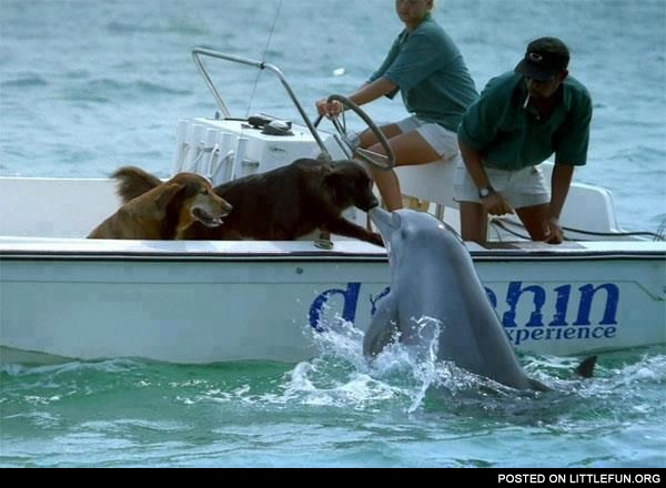 Dogs and dolphin