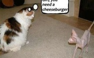 Girl, you need a cheeseburger
