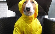 Dog in yellow jumpsuit