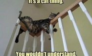 It's a cat thing, you wouldn't understand.