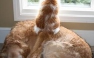 Cat on dog. Viewpoint.