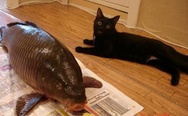 Great catch. Cat and big fish.