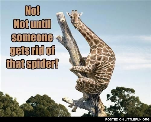 NO! Not until someone gets rid of that spider!