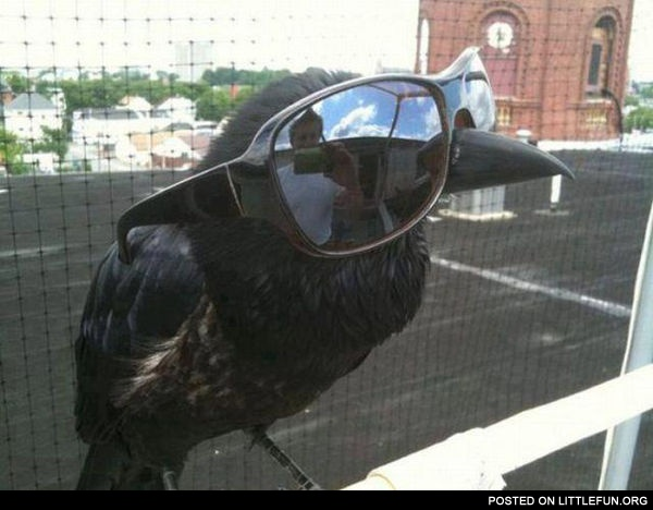 Crow in glasses