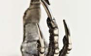 Ann Demeulemeester Claw Ring
