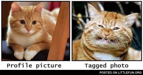 Profile picture and tagged photo