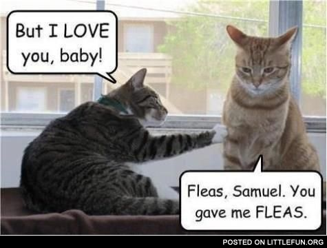 But I love you, baby. Fleas, Samuel. You gave me fleas.