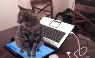 Cat and laptop. Don't sit on the keyboard? Ok.