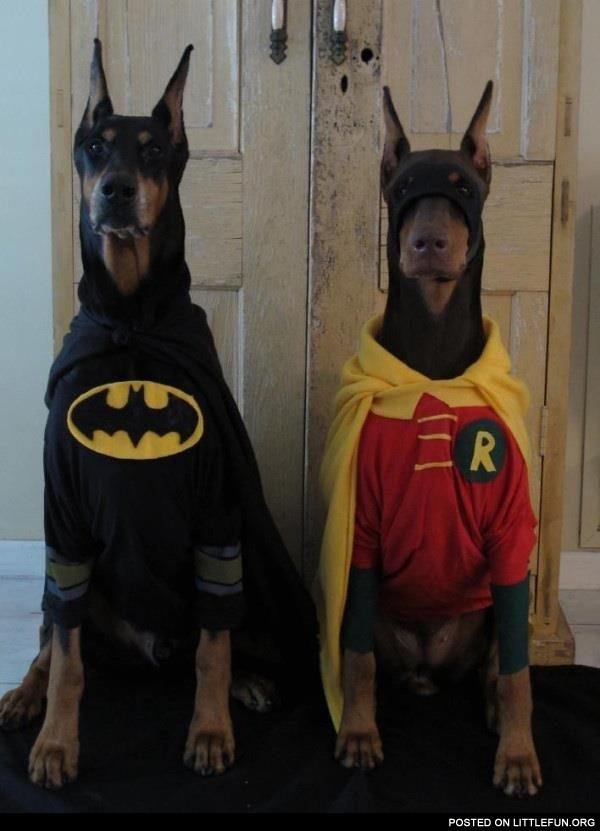 Dressed dogs, Batman and Robin