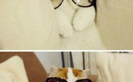 Fabulous cat in glasses