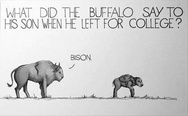 What did the buffalo say to his son when he left for college? Bison.