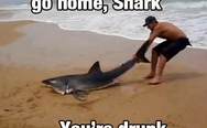 Go home, shark