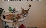 Lynx in your sinks