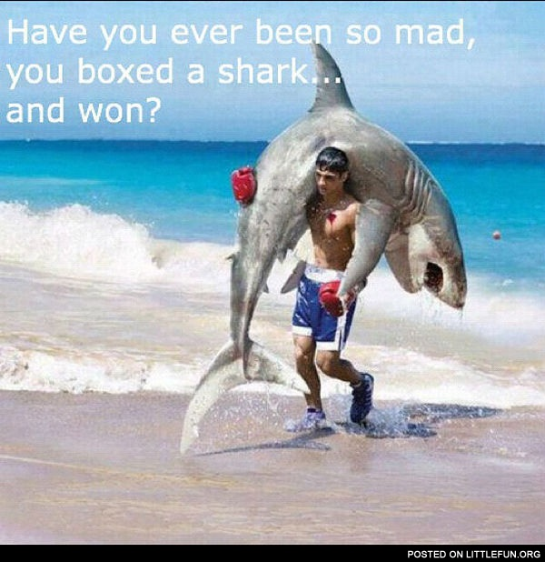 Have you ever been so mad, you boxed a shark and won?