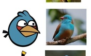 Angry birds in reality