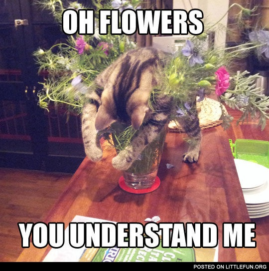 Oh flowers, you understand me