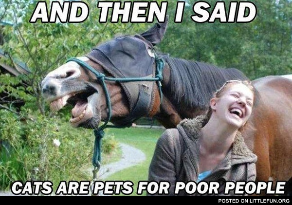 "And then I said, - ""Cats are pets for poor people"""