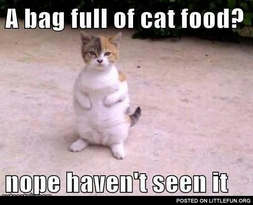 A bag full of cat food?