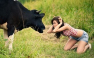 Cow vs. girl