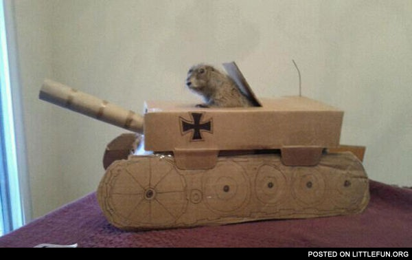 Just A Prairie Dog In A Tank