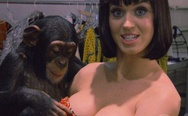 Katy Perry and chimp