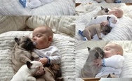 Baby sleeping with three dogs