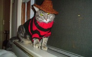Freddy Krueger cat costume