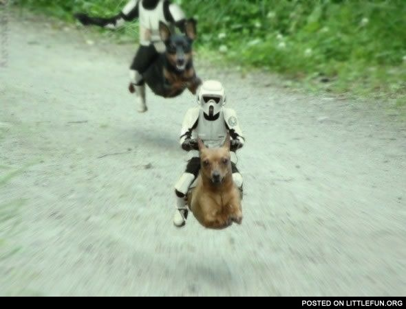 Star Wars Flying Dogs