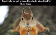Squirrels and nuts