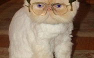 Dwight Schrute Cat