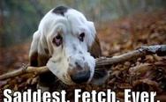 Saddest fetch ever