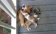 My pile of cats
