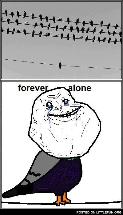 Forever alone pigeon