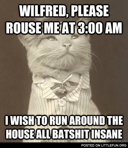 Wilfred, please rouse me at 3:00 am