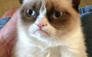 Grumpy cat just grumpy