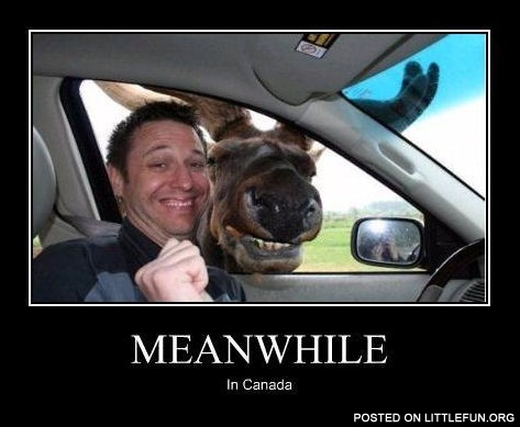 Meanwhile in Canada. Selfie with moose.
