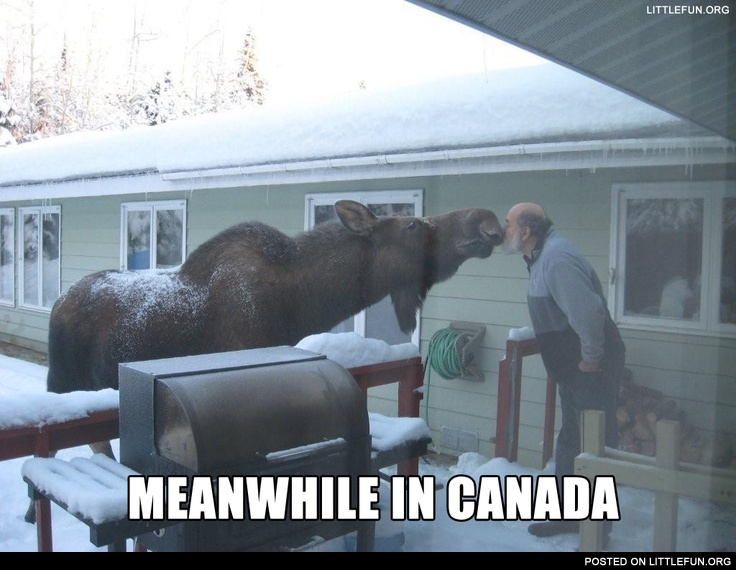 Meanwhile in Canada. Kissing a moose.