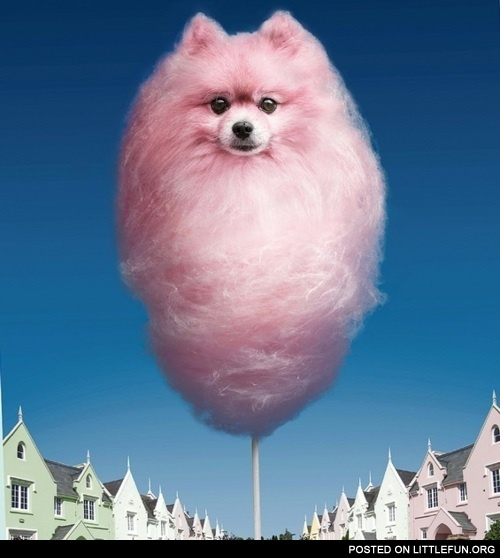 Candy floss dog