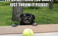 Just throw it please