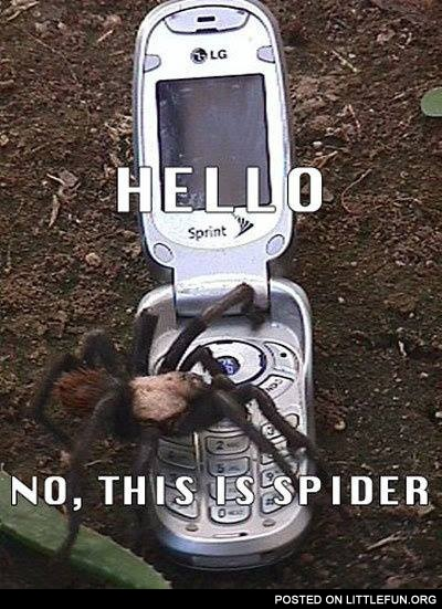 Hello, no, this is spider