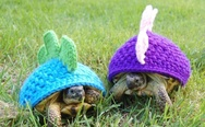 Punk turtles