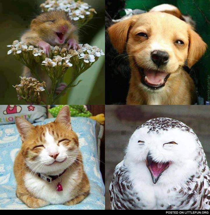 Happiness. Smiling animals.