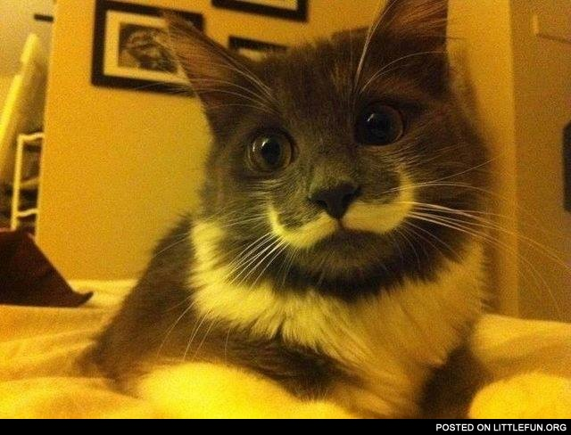 Cat with mustache