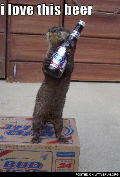 Otter and beer