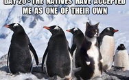 The natives have accepted me as one of their own
