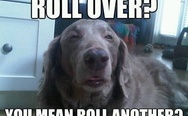 You mean roll another?